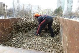 Вывоз веток, порубочных остатков и спиленных деревьев